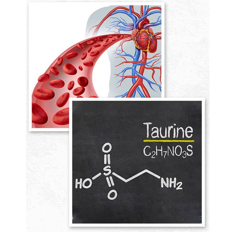 L-Taurine-can-increase-blood-flow-to-protect-your-precious-neurovascular-system,-circulation-and-blood-vessel-health