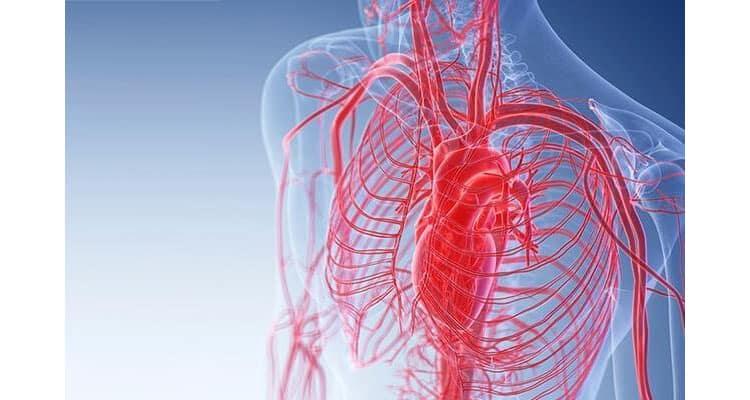 Improves blood flow
